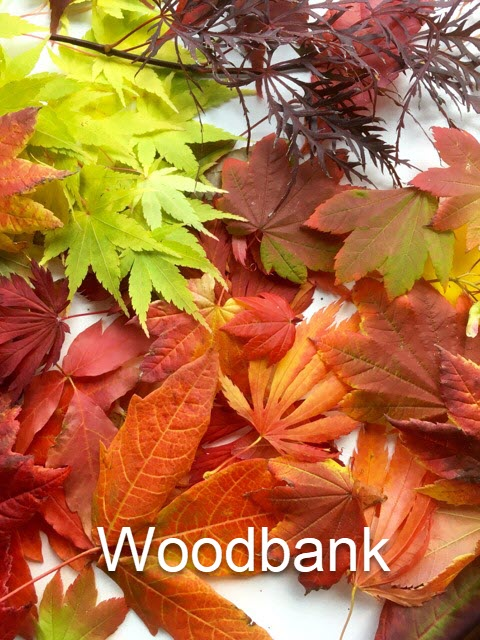 Woodbank autumn leaves